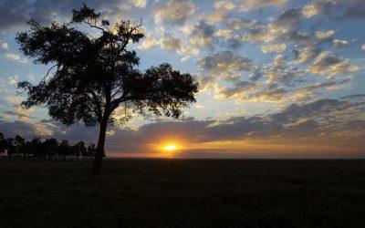Magie de la réserve Masaï Mara