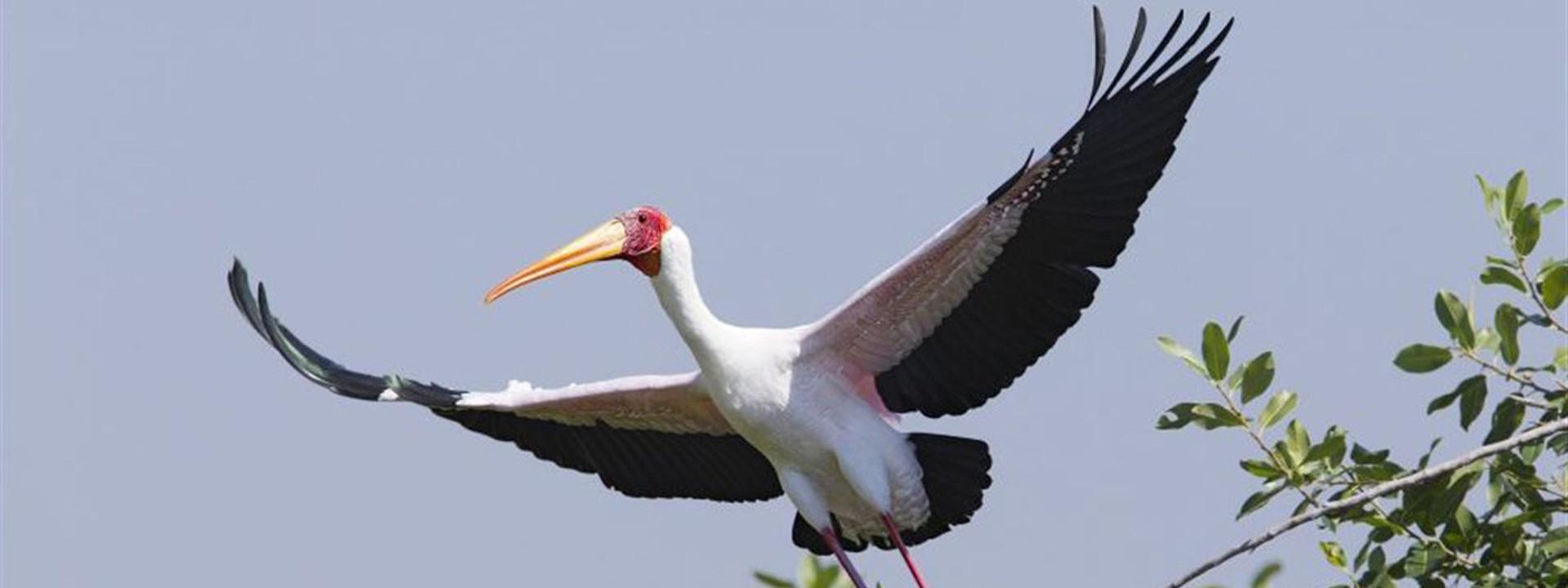 oiseaux page 5